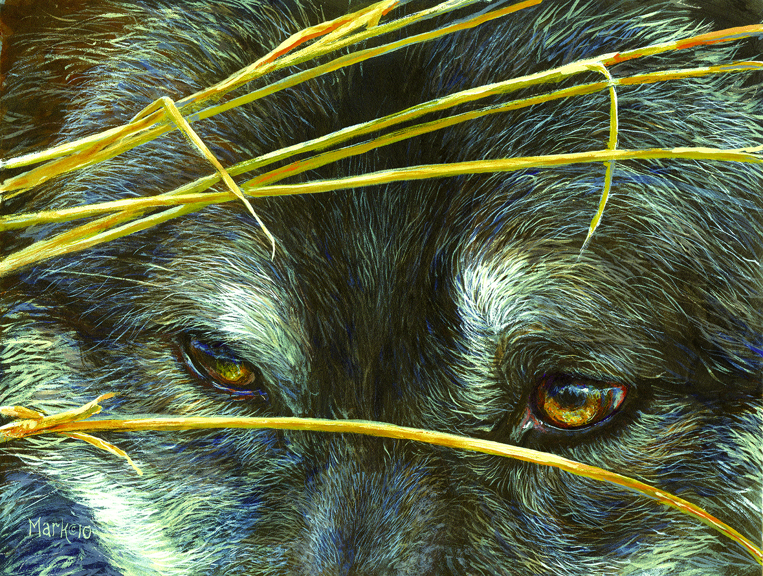 Wolf Eyes and Reeds 500 pc Jigsaw Puzzle by SunsOut