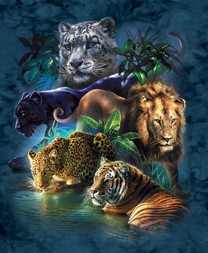 Big Cat Prowess 1000 pc Jigsaw Puzzle